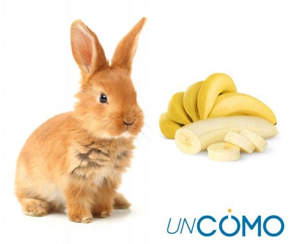 ¿Pueden comer plátano los conejos?