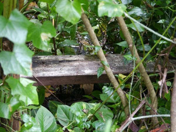 Cómo cuidar una planta hiedra - Características de la Planta Hiedra