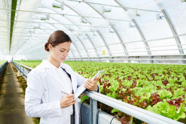 Qué son las plantas transgénicas y ejemplos - Ejemplos de plantas transgénicas