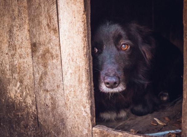 Por qué mi perro llora mucho - Por qué mi perro llora mucho