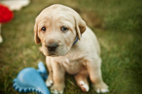 Por qué mi perro llora mucho - Por qué mi cachorro llora mucho