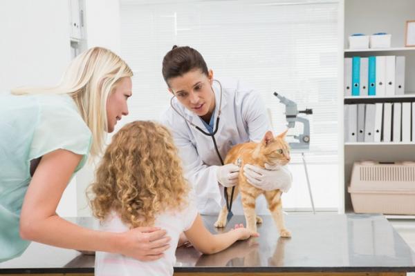 Cómo curar heridas con gusanos en gatos - Cómo eliminar gusanos en heridas de gatos - tratamiento de la miasis
