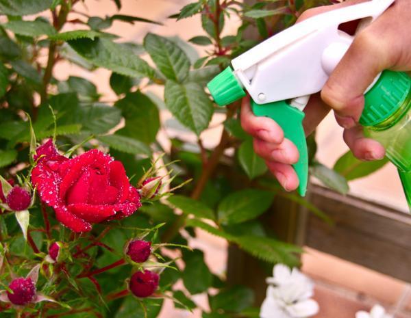 Cómo preparar insecticida con aceite de neem - Cómo usar el aceite de neem como insecticida