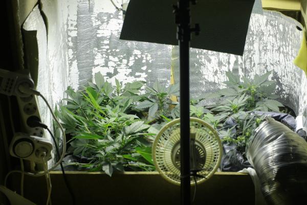 Iluminación LEC para cultivo: qué es y cómo funciona - Qué es la iluminación LEC y cómo funciona