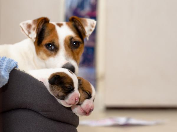Por qué los perros comen caca - Por qué los perros comen caca – las causas