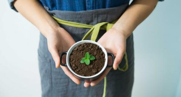 Cuidados de la planta menta piperita - Características de la tierra para la menta piperita