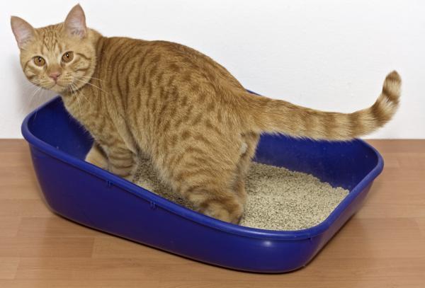 Remedios caseros para el estreñimiento en gatos - Síntomas del estreñimiento en gatos