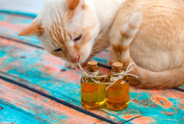 Remedios caseros para el estreñimiento en gatos - Remedios caseros para el estreñimiento en gatos: laxantes efectivos