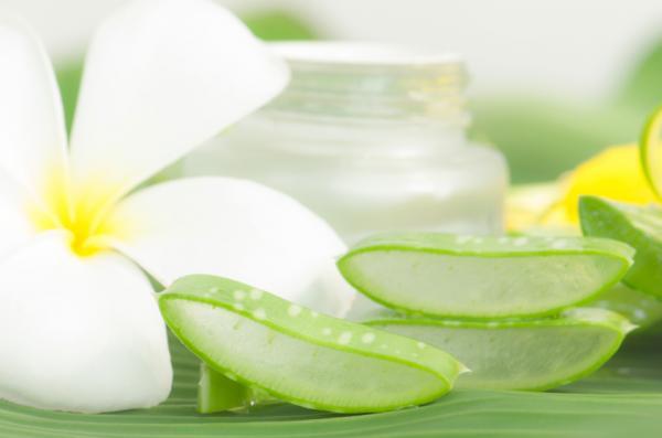 Remedios caseros para irritación en el ano - Aloe vera, otro de los remedios para irritación en el ano