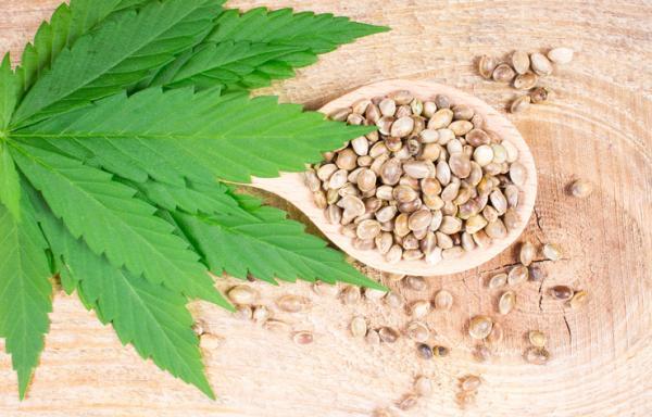 Tipos de semillas de marihuana - Nombres de semillas autoflorecientes