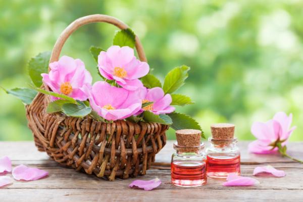 ¿Es bueno el aceite de rosa mosqueta para la cara? - Beneficios del aceite de rosa mosqueta para la cara