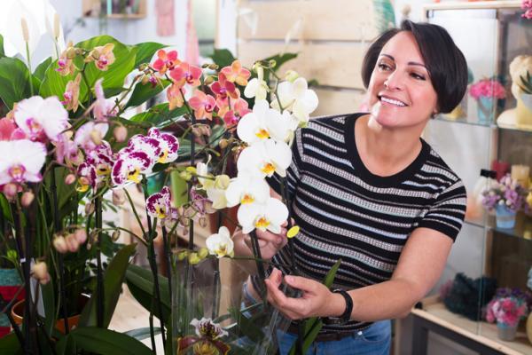 Cómo plantar orquídeas paso a paso - Cómo cultivar orquídeas