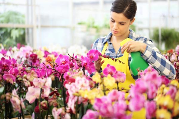 Cómo plantar orquídeas paso a paso - Tipos de orquídeas y cómo cultivarlas