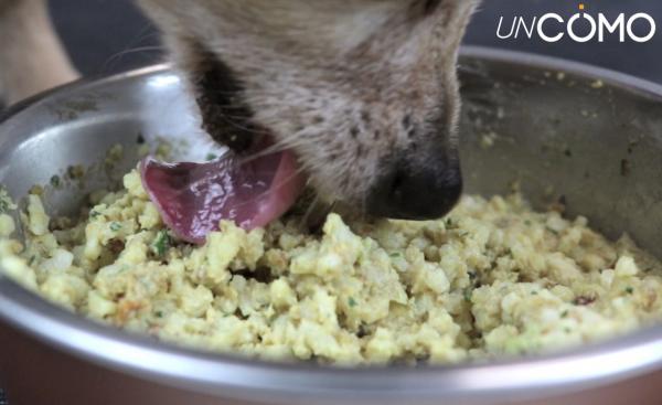 Síntomas de empacho en perros y cómo curarlo - Causas de empacho en perros