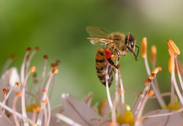 Significado de la abeja como animal de poder - Significado esotérico de las abejas