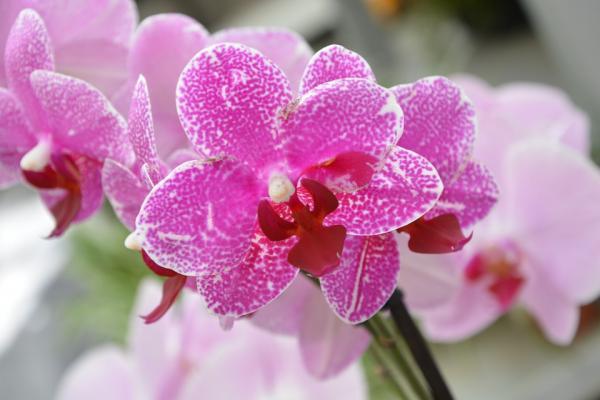 Cómo regar las orquídeas - Cómo cuidar una orquídea - la raíz de las orquídeas