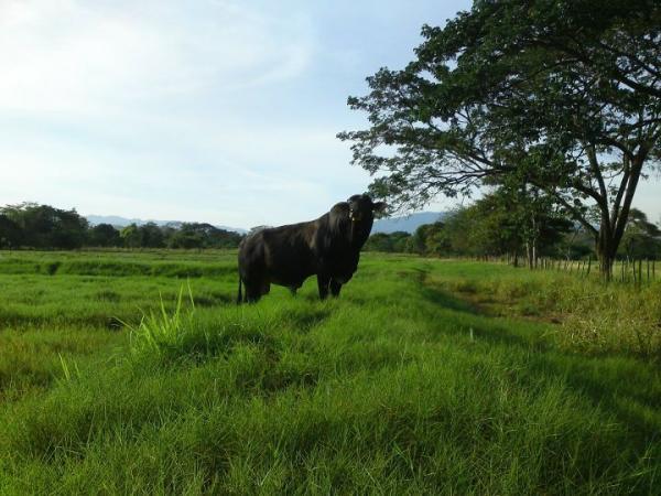Significado del toro como animal de poder - Cuál es el significado del toro como animal de poder