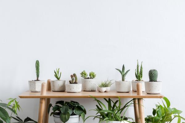 Cada cuánto se riega un cactus - Cada cuánto se riega un cactus mini