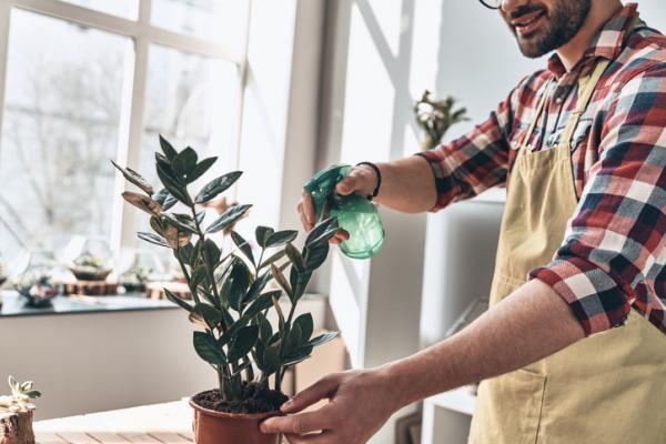 Cómo eliminar la cochinilla algodonosa - Eliminar la cochinilla con aceite de Nim
