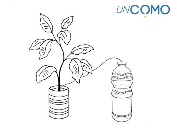 Cómo regar las plantas en vacaciones - Cómo regar las plantas en vacaciones - paso a paso