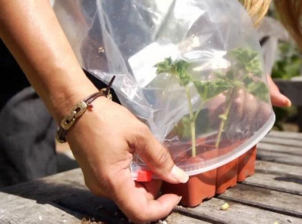 Cómo regar las plantas en vacaciones - Otros inventos para regar las plantas en vacaciones