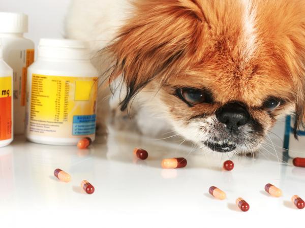 Metronidazol para perros: qué es, para qué sirve y dosis - Dosis de metronidazol para perros