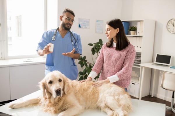 Metronidazol para perros: qué es, para qué sirve y dosis - Para qué sirve el metronidazol