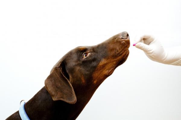 Laxantes para perros: medicamentos, alimentos y dosis - Medicamentos laxantes para perros
