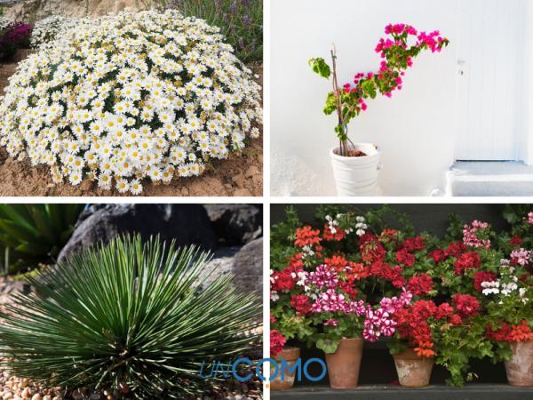 Las mejores plantas de exterior en maceta - Más plantas de exterior resistentes al sol