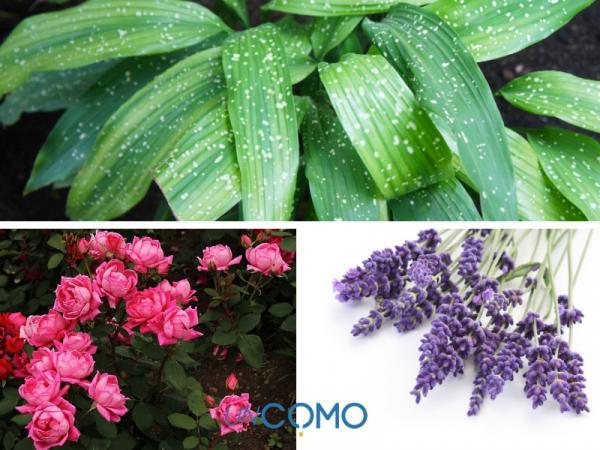 Las mejores plantas de exterior en maceta - Otras plantas de exterior fáciles de cuidar