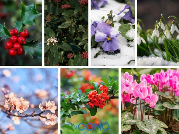 Las mejores plantas de exterior en maceta - Plantas de exterior para invierno
