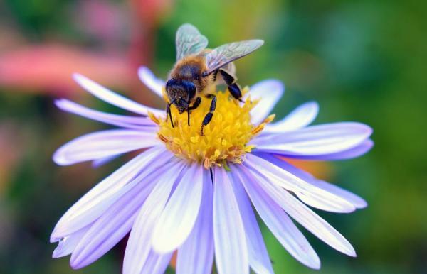 Cómo hacen la miel las abejas - Cómo hacen la miel las abejas