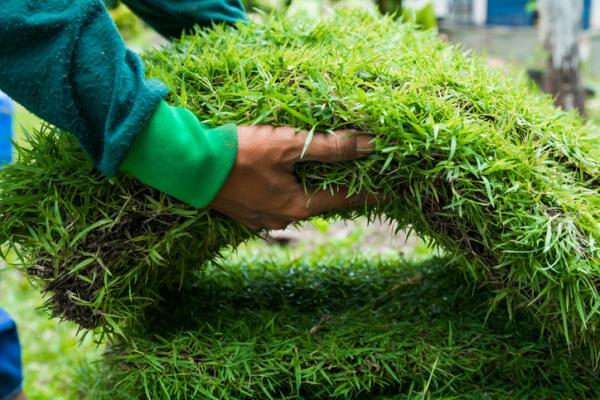 Cómo limpiar el césped artificial - Colocación y mantenimiento del césped artificial