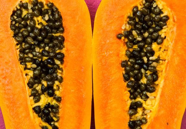 Cómo sembrar papaya - Cómo cultivar papaya en casa