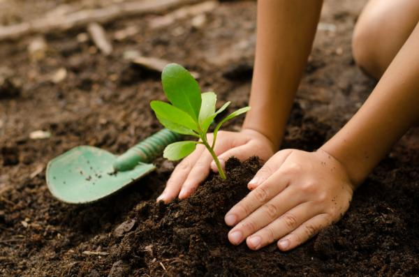 Qué son los abonos orgánicos y tipos - Abonos orgánicos caseros