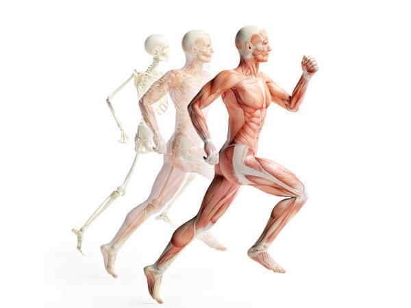 Diferencia entre sistema y aparato - Aparatos del cuerpo humano