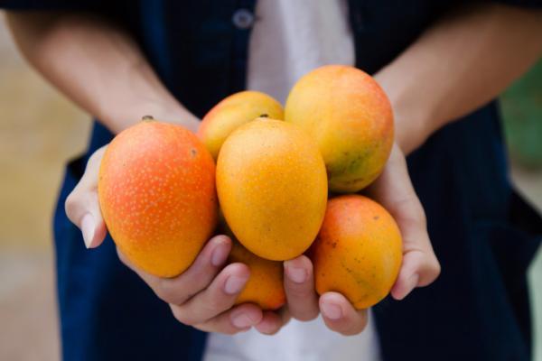 Cómo sembrar mango - Planta de mango: cuidados