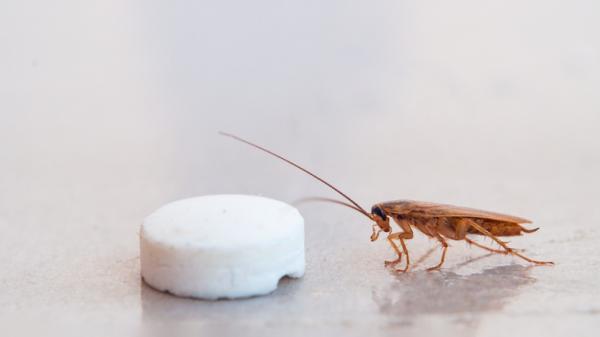 Cómo hacer trampas para cucarachas caseras - Remedios caseros para cucarachas