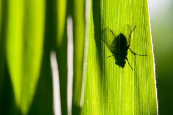 Cómo hacer trampas para moscas caseras - Trampas para moscas con papel