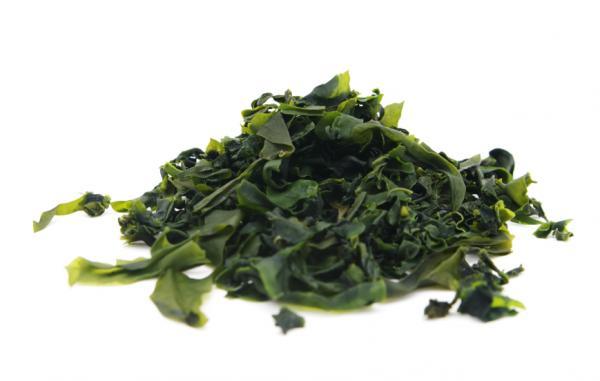 Algas comestibles: tipos, propiedades y beneficios - Qué son las algas marinas