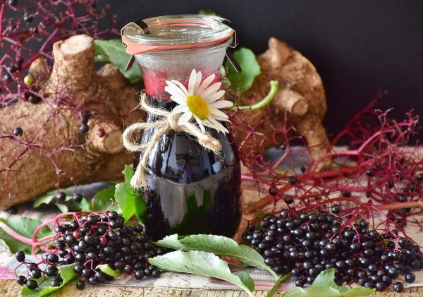 Bayas de saúco: propiedades, beneficios y contraindicaciones - Propiedades y beneficios de las bayas de saúco