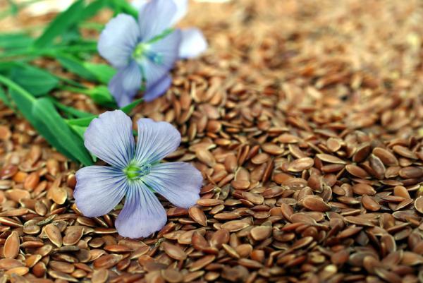 11 tipos de semillas comestibles y sus propiedades - Semillas de lino: propiedades