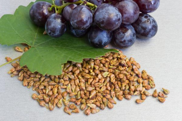 11 tipos de semillas comestibles y sus propiedades - Semillas de uva: información nutricional