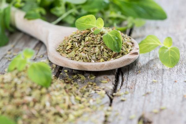 Para qué sirve el orégano como planta medicinal - Composición nutricional de la planta de orégano
