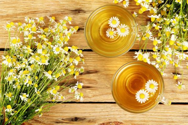 18 plantas medicinales para la diarrea - Camomila o manzanilla para la diarrea