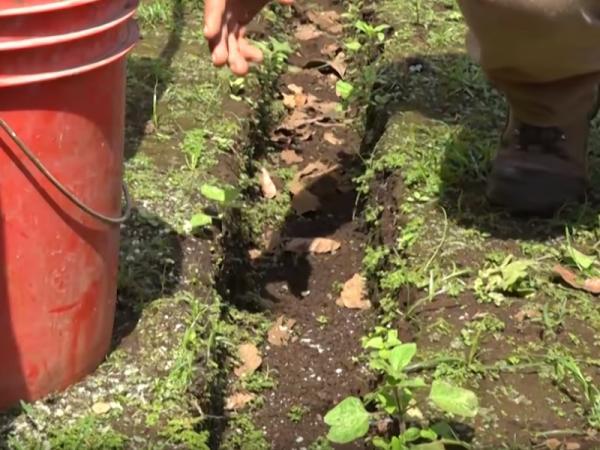 Cómo plantar bambú - Paso 1. Prepara la tierra para plantar el bambú