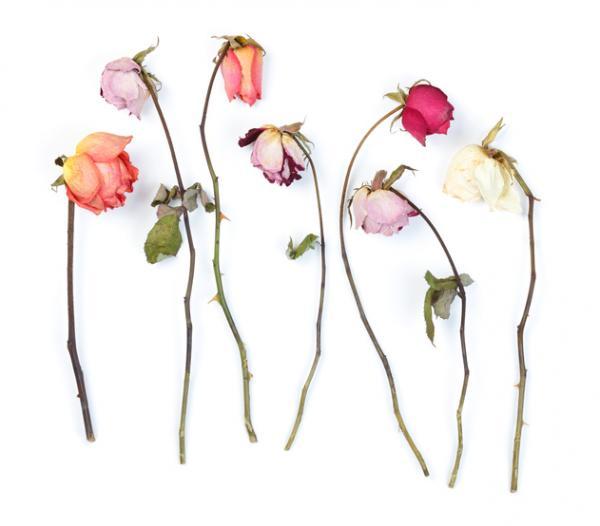 5 cosas que dan mala suerte - Flores y plantas que dan mala suerte
