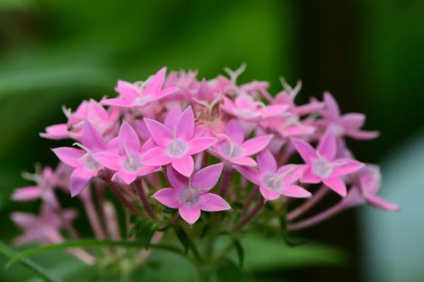 Plantas con flores de exterior - Plantas con flores de exterior durante todo el año