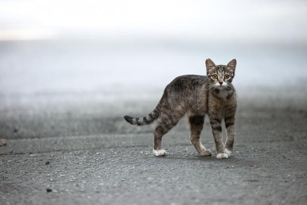 Por qué lloran los gatos - El comportamiento de los gatos