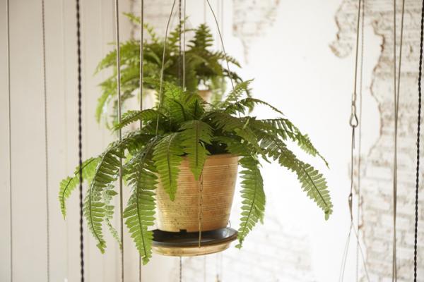 18 plantas de sol y sombra: nombres y características - Helechos: cuidados y características